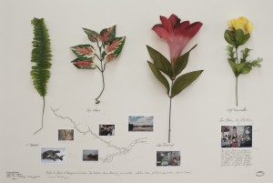 Tabatinga taxons from Herbario de plantas artificiales (Herbarium of artificial plants), 2014.